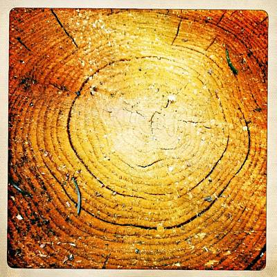 Photograph - Wood Texture Of A Tree Log by Matthias Hauser