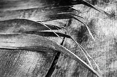 Photograph - Wood Whispers by Dean Harte