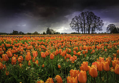 Woodburn Tulip Festival Art Print by Jean-Jacques Thebault