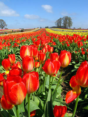 Photograph - Woodburn Tulip Fields by Lisa Foster