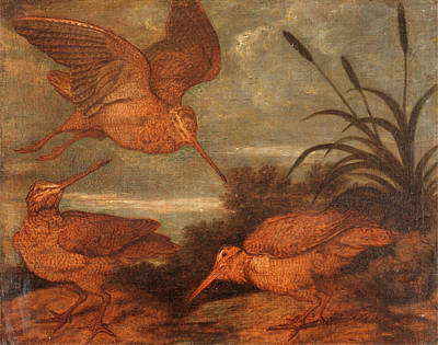 Woodcock Painting - Woodcock At Dusk, Francis Barlow, 1626-1702 by Litz Collection