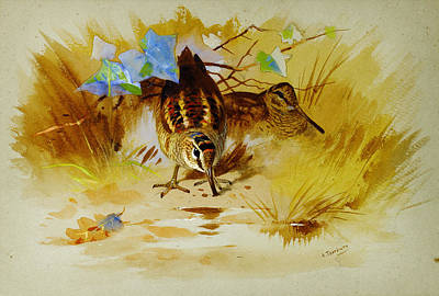 Woodcock Painting - Woodcock In A Sandy Hollow by Celestial Images