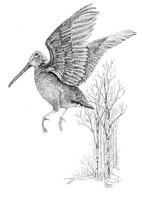 Woodcock In Flight Art Print