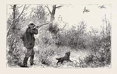 Woodcock Drawing - Woodcock Shooting by English School