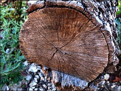 Photograph - Woodcomp2 2009 by Glenn Bautista