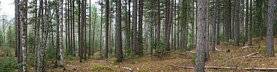 Photograph - Wooded Panorama In Our Northeast by Kim DePietro