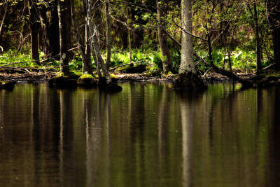 Wooded Reflection Art Print by Karol Livote