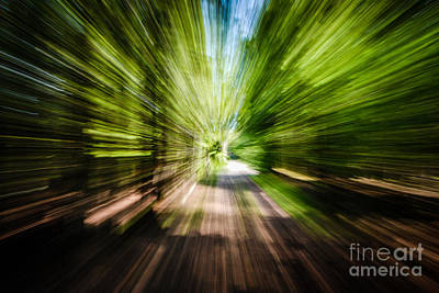 Photograph - Wooded Spin by Grace Grogan