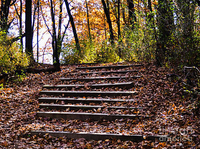 Wooded Stairs Art Print
