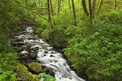 Wooded Stream In The Spring Art Print