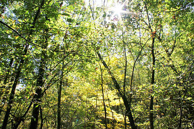 Photograph - Wooded Sunshine by Inspired Arts