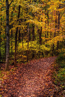 Photograph - Wooded Trail by Ron Pate