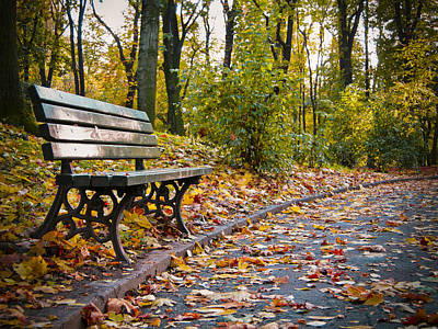 Photograph - Wooden Bench In A Park by Vlad Baciu