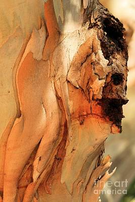 Photograph - Wooden Face by Adam Jewell