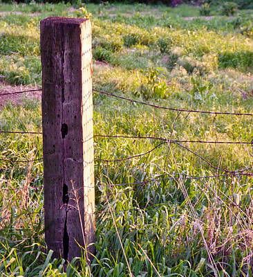 Wooden Fencepost Art Print by Tracy Salava