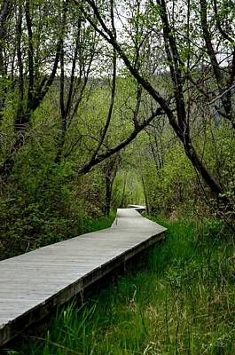 Photograph - Wooden Path 5-3-2014 by Guy Hoffman