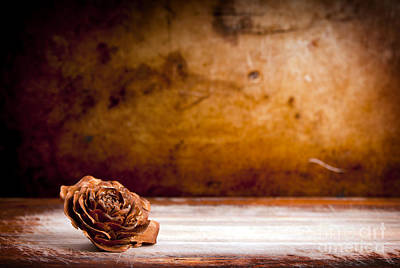 Wooden Rose Background Art Print by Tim Hester