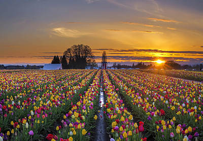 Sun Photograph - Wooden Shoe Tulip Festival Sunset by David Gn