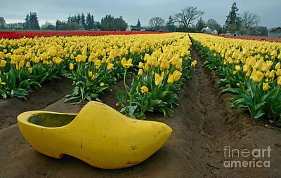 Wooden Shoe Tulip Fields Art Print by Nick  Boren