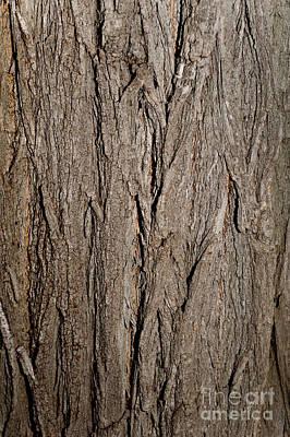 Wooden Texture Original