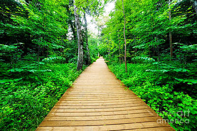 Way Photograph - Wooden Way In Green Forest Lush Bush by Michal Bednarek