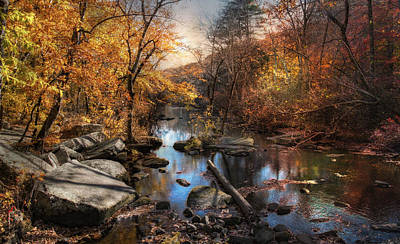 Photograph - Woodland Autumn by Robin-Lee Vieira
