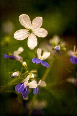 Photograph - Woodland Beauties by Wayne Meyer