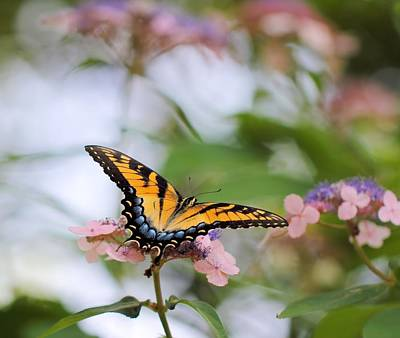 Photograph - Woodland Butterfly by Katherine White