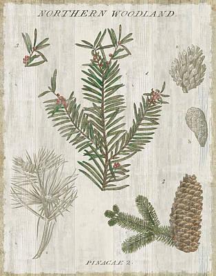Woodland Chart II Art Print by Sue Schlabach