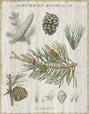 Woodland Chart IIi Art Print by Sue Schlabach