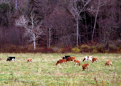 Photograph - Woodland Dairy by Christian Mattison