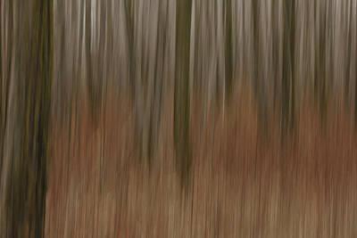 Woodland Dreams Art Print by Penny Meyers