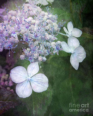 Woodland Hydrangea In Blue Art Print