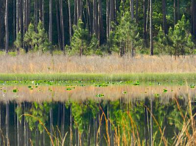 Photograph - Woodland Lake by Grace Dillon