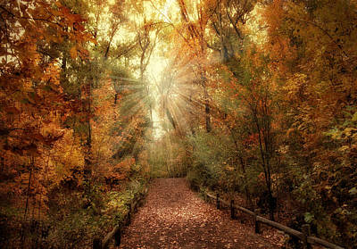 Autumn Woods Photograph - Woodland Light by Jessica Jenney