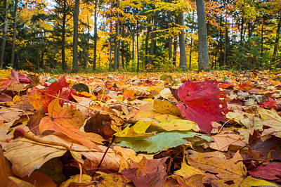Photograph - Woodland Litter by Bill Pevlor