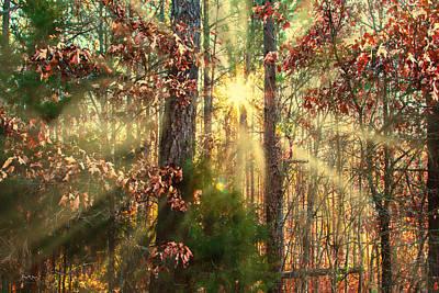 Photograph - Landscape - Sunrise - Woodland Morning by Barry Jones