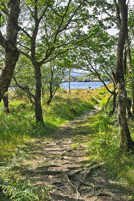 Photograph - Woodland Path - Killarney by Jane McIlroy