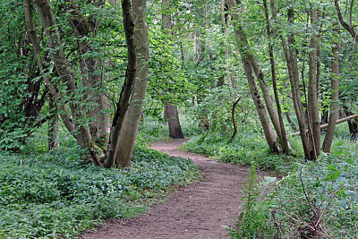 Photograph - Woodland Path  by Tony Murtagh