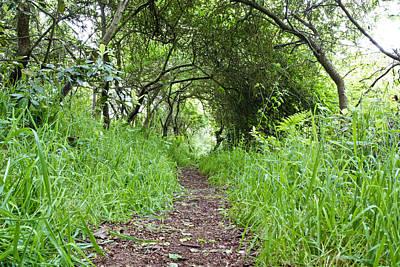 Ambition Photograph - Woodland Pathway by Tom Gowanlock