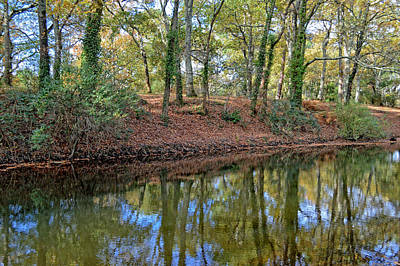 Autumn Leaves Photograph - Woodland Reflections by Bishopston Fine Art