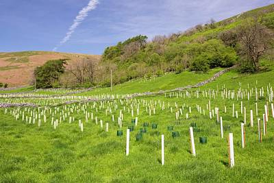 Spring Landscape Photograph - Woodland Restoration And Tree Planting by Ashley Cooper