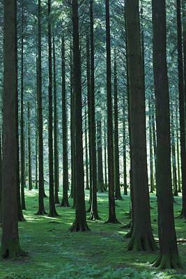 Gougane Barra Photograph - Woodland Scene In Gougane Barra Forest by Ken Welsh