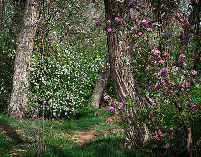 Photograph - Woodland Spring With Cherry Blossoms by Julie Magers Soulen