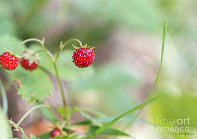Basketball Patents - Woodland Strawberry by Jivko Nakev
