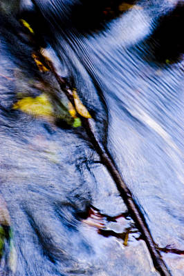 Photograph - Twig In Motion by Mick House