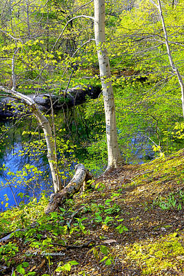 Woodland Stream In Spring Art Print by A Gurmankin