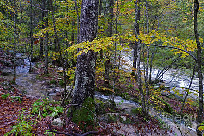 Photograph - Woodland Stream  by Phil Banks