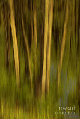 Photograph - Woodland Tapestry by Sandi Mikuse