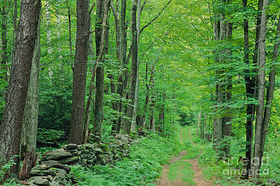 Photograph - Woodland Trail by Alan L Graham